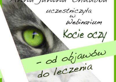 Certyfikat Kocie oczy - od objawów do leczenia